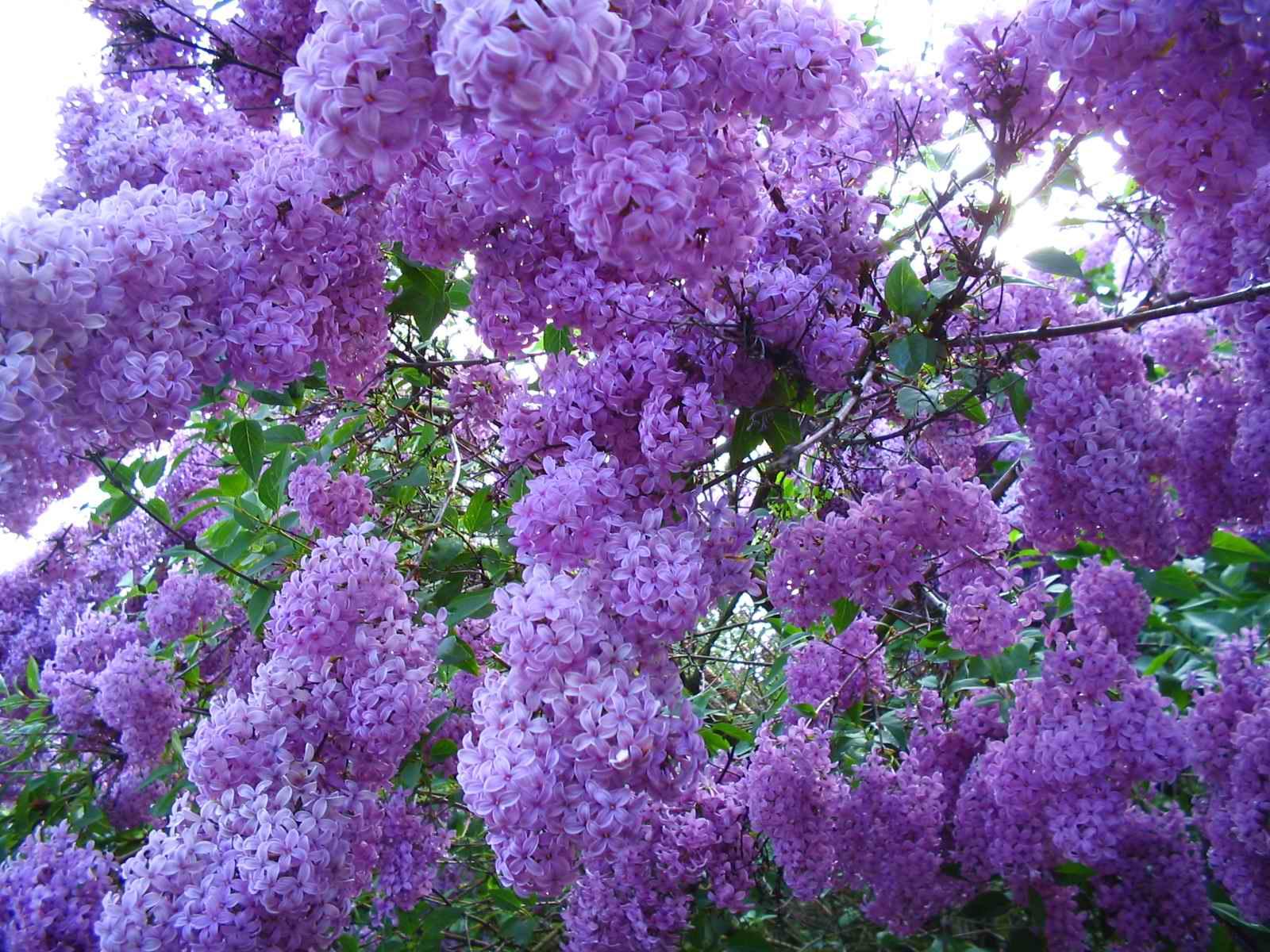 картинки с мелкими цветами на телефон
